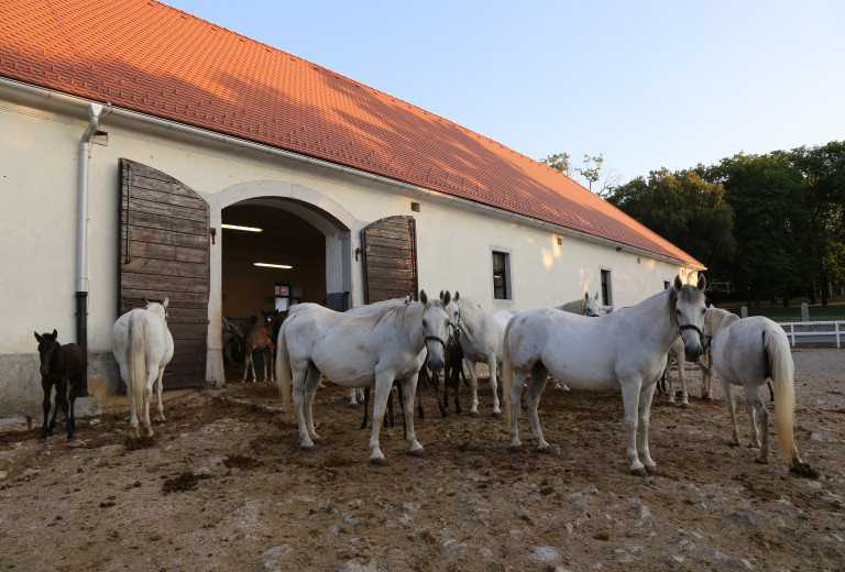 Lipizzan Horse Breeding Traditions as Intangible Cultural Heritage of Humanity