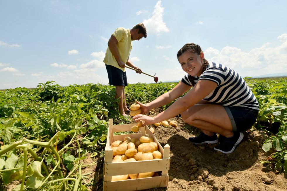 Mlada kmeta na njivi