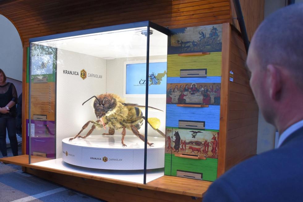 3D matrica kranjske čebele v izložbi.