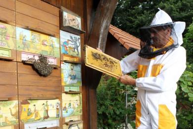 Čebelar pri čebelnjaku.
